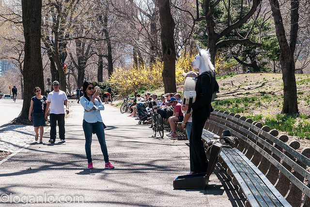 A woman in Central Park wearing a suit, heels and a horsehead playing the guitar.