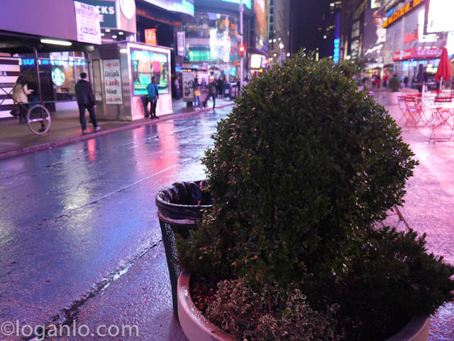 A shrub in Times Square, NYC