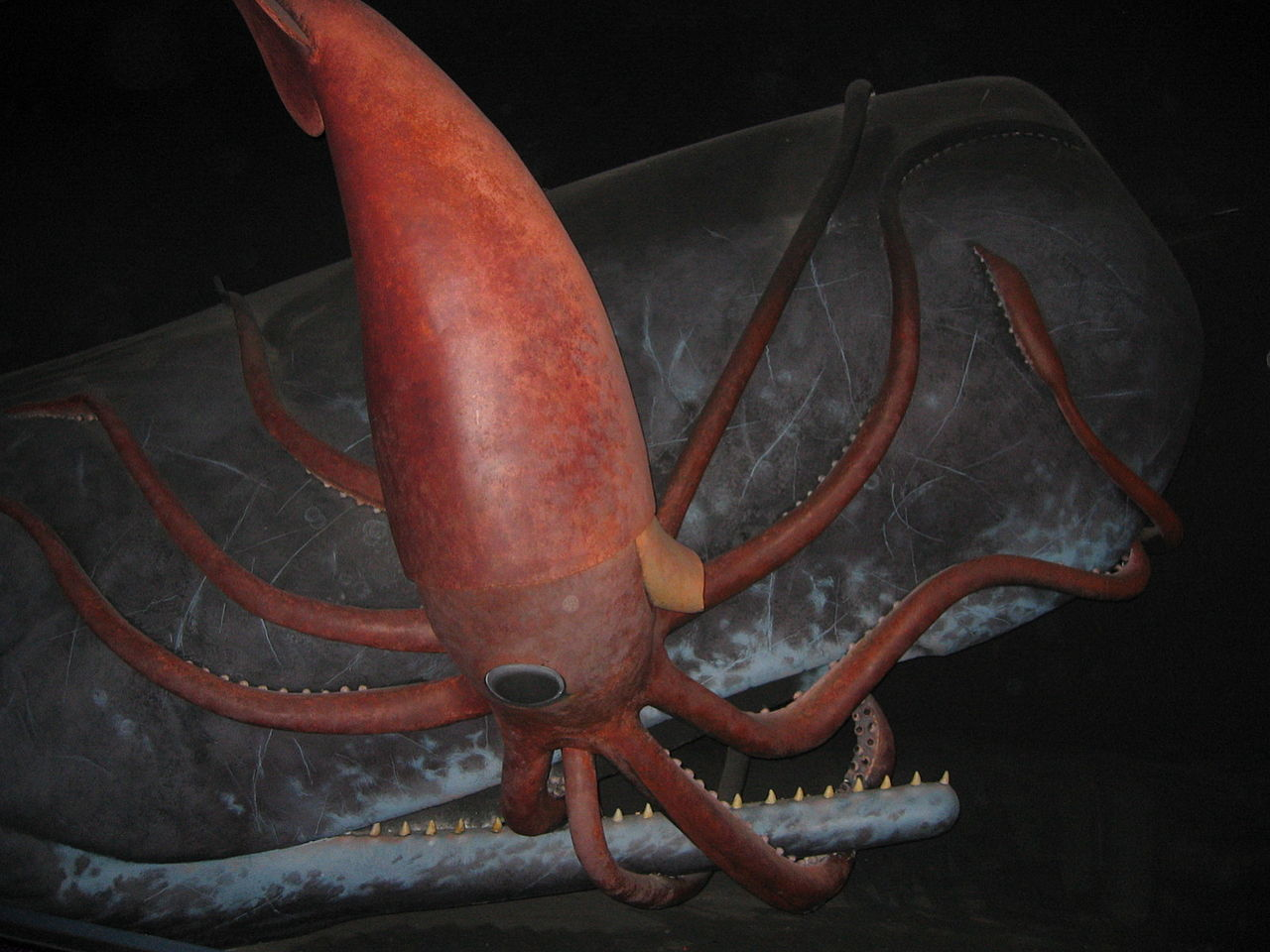Display of sperm whale and giant squid battling in the Museum of Natural History